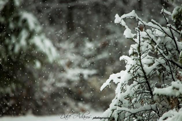 Dale Adams Snowy 4