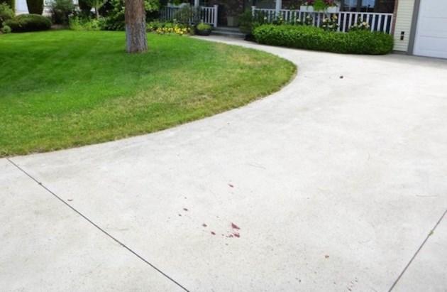 Deer blood on driveway