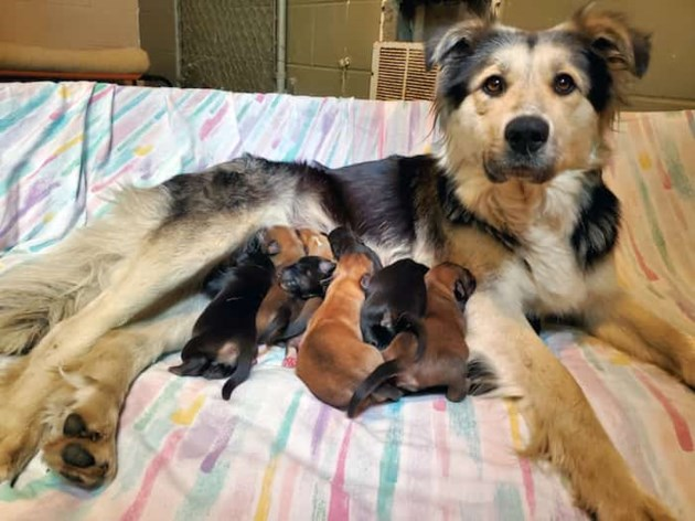 mother dog with puppies
