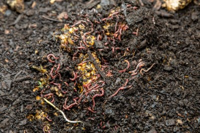 20190910 Canmore Golf Compost 0011