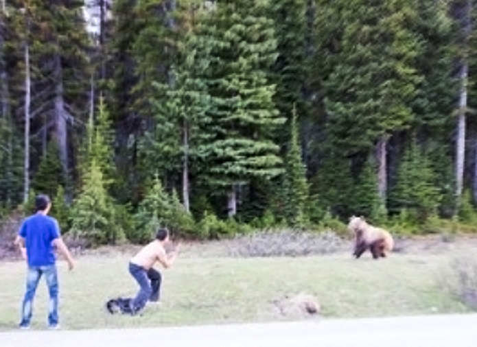 CANADA: Shirtless man who tried to fight grizzly bear in Banff National Park fined $4,000