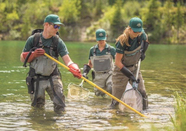 Parks Canada aquatics specialists remove fish from Johnson Lake in Banff National Park as part of its plan to eradicate whirling disease in the lake.