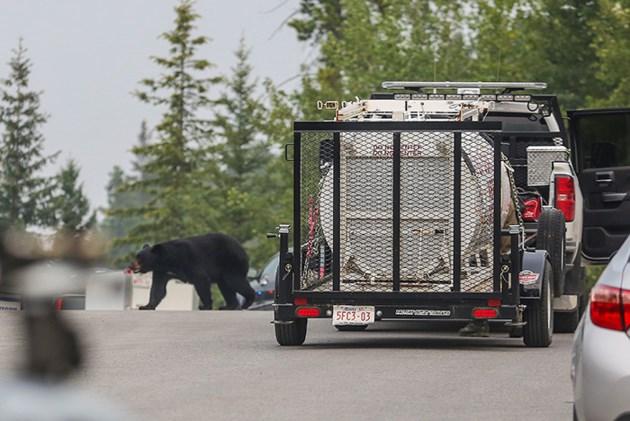 Peaks Black Bear