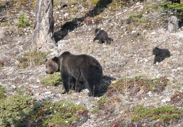 grizzly71_6997cdouce_web