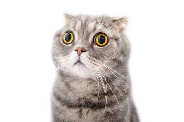funny cat AdobeStock_123576512