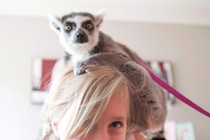 Toronto launches public consultation to address exotic animal and mobile zoo problem