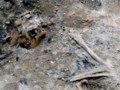 Subway digging uncovers 'Pompeii-like scene' in Rome