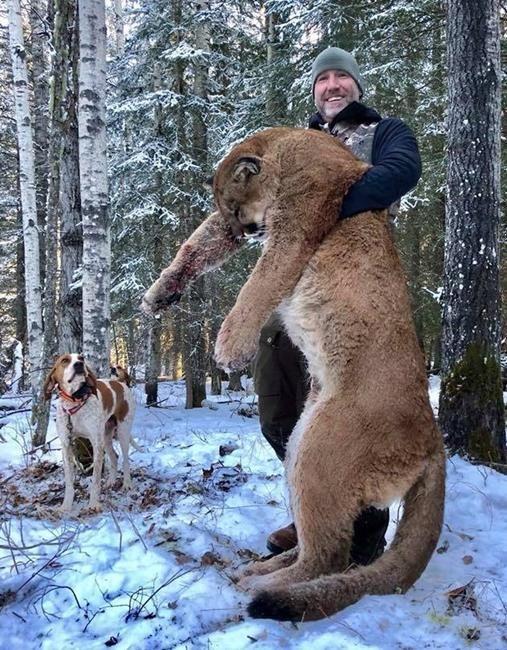 Canada TV personality Steve Ecklund shoots cougar, sparking backlash