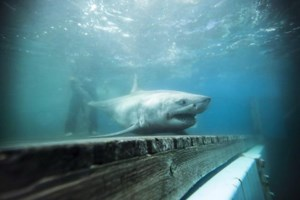 All sharks tagged in N.S. expedition can now be tracked on Ocearch website