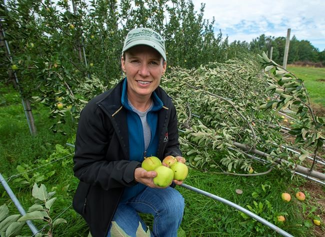 Dorian damage worse than first thought in Nova Scotia's famed Annapolis Valley