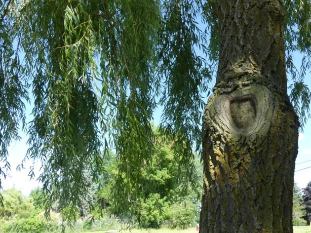 USED 2018-07-17-tree knot