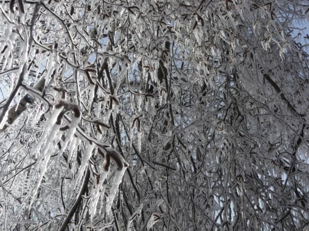 USED 2019-02-12-frozen tree