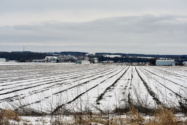 USED 2019-02-19-holland marsh winter