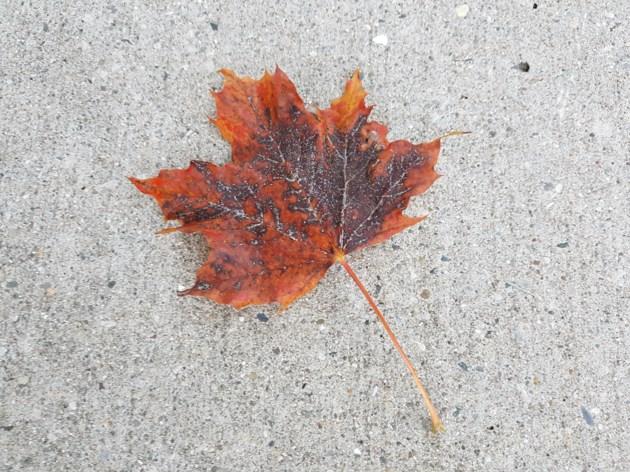 Leaf Oct 10, 2018