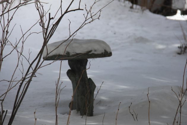 USED 2018-04-12goodmorning  2 Birdbath in winter. Photo by Brenda Turl for BayToday.