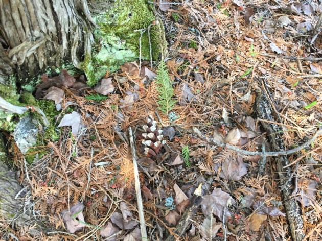 USED 2018-06-07goodmorning   7  Forest floor near Trout Lake. Photo by Brenda Turl for BayToday.