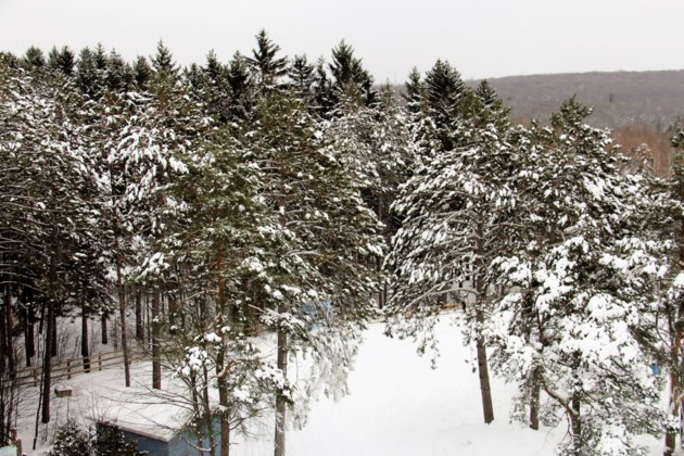 USED 2019-01-3goodmorning  7 Snow covered trees at Laurentian Ski Hill. Photo by Brenda Turl for BayToday.