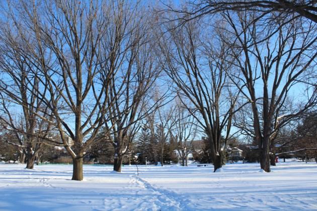 USED 2019-01-28 Commissioners Park MV6
