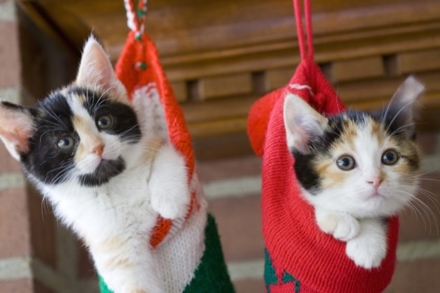 kitten stockings AdobeStock
