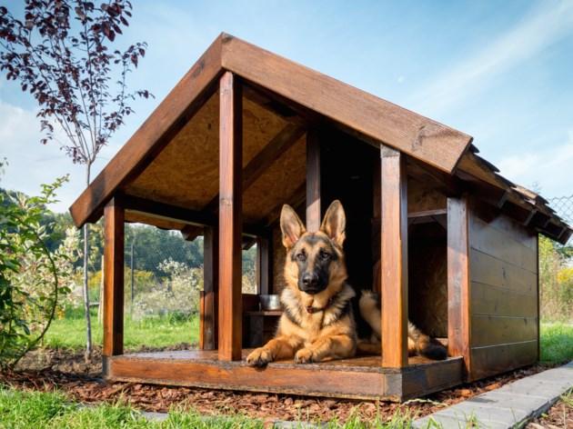 dog house AdobeStock_70247668