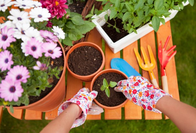 gardening stock