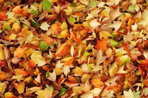 leaves fall autumn