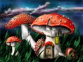 Police say officers pulled over car, found magic mushrooms