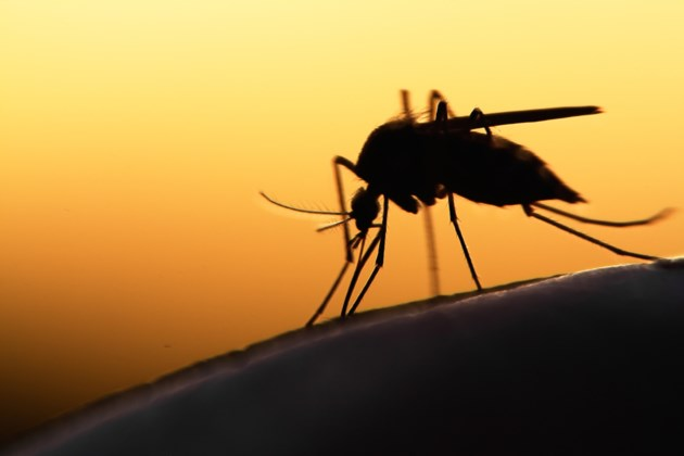 Mosquitoes test positive for West Nile in Clark County