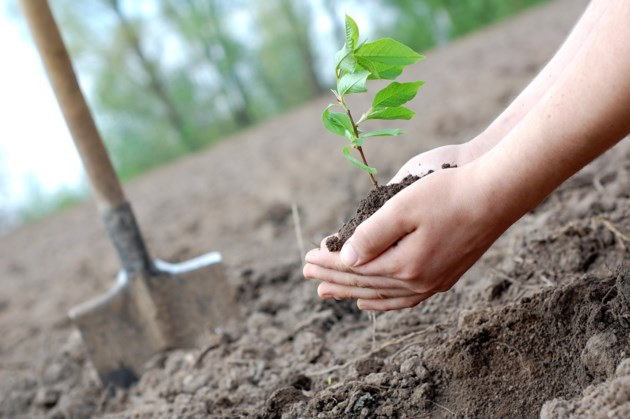 tree planting shutterstock