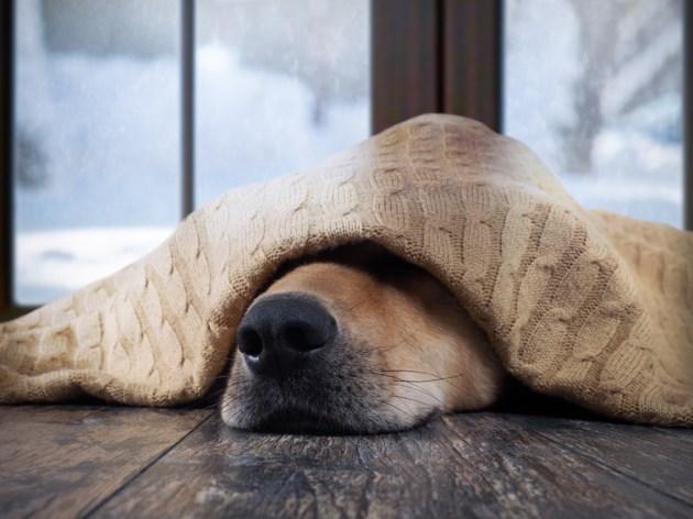 WarmingDog
