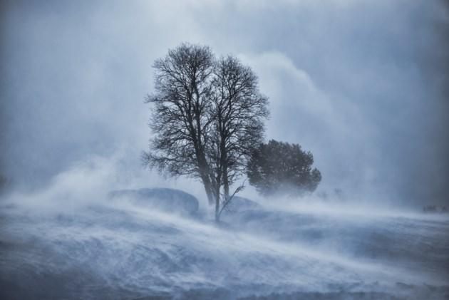 WinterStormField