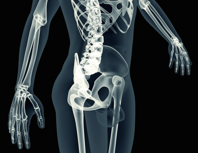 xray body scan skeleton