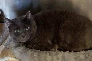 <b>Adopt Me:</b> Ash wants to be your loving feline companion