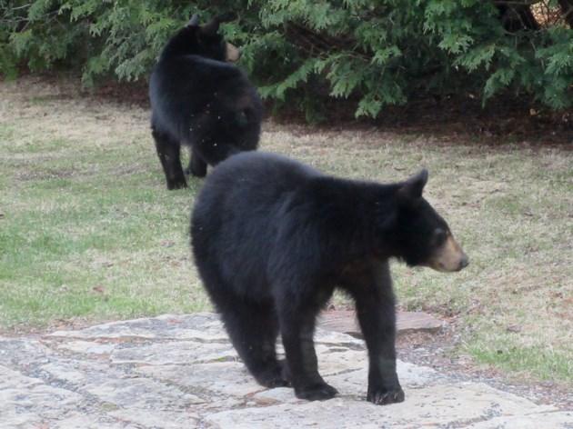 2016 - 06 - 8 - Trading Post Bears - Klassen-2