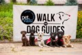 Join the Pet Valu Walk for Dog Guides