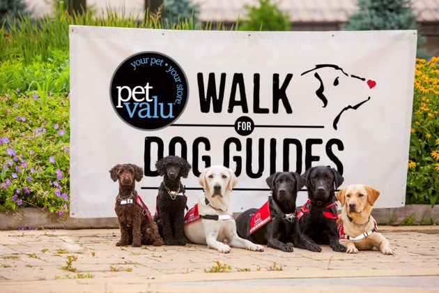Pet Valu Walk for Dog Guides Image