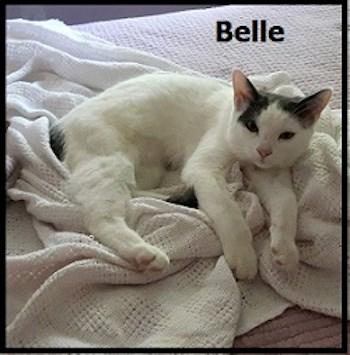 AdoptMe2017-09-12Belle