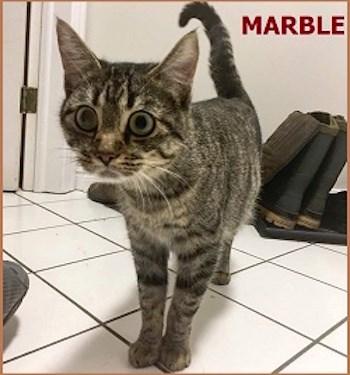 AdoptMe2017-11-21MarbleMomCat