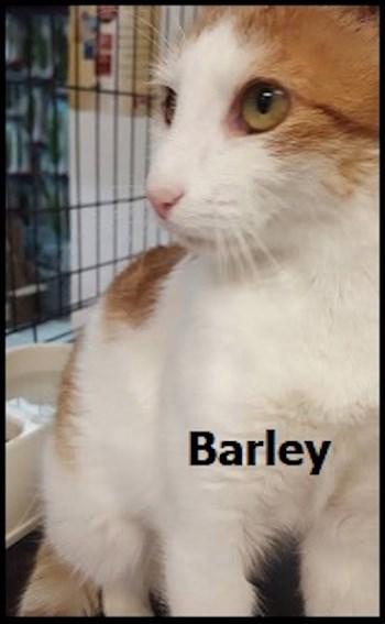 AdoptMe2018-02-13Barley