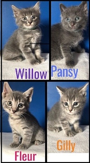 AdoptMe2019-08-13WillowPansyFleurGilly