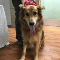 <b>Creature Feature:</b> Junior is spry for his not-so-junior age (adopted)