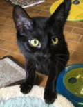 <b>Adopt Me:</b> Baby is looking for a playmate