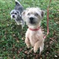 <b>Creature Feature:</b> Charlie and Snoopy (adopted)