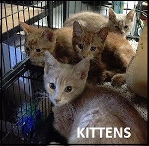 CreatureFeature2016-09-22Kittens