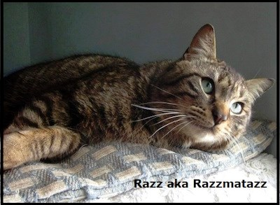 CreatureFeature2016-11-03Razz