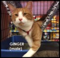 <b>Creature Feature:</b> Playful Ginger (adopted)