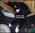 <b>Creature Feature:</b> Boots loves to lounge (adopted)