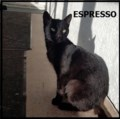 <b>Creature Feature:</b> Espresso the cat (adopted)