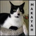<b>Creature Feature:</b> Makayah keeps a very clean cage (adopted)