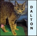 <b>Creature Feature:</b> Dalton the brown tabby